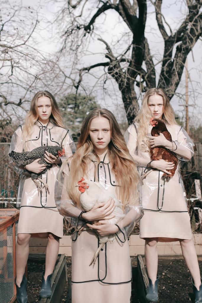 Chickens2_1